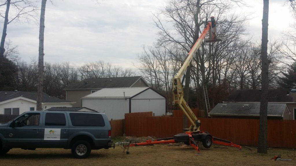 Tree Service by MJM Property Maintenance